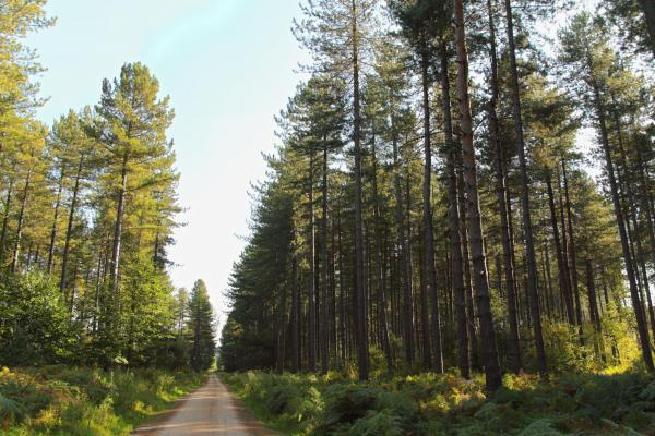 Sherwood Pines Country Park
