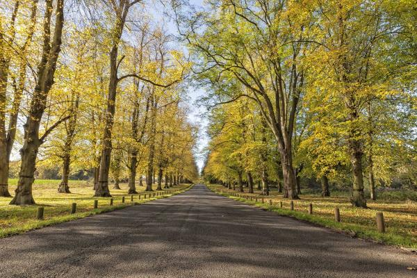 Clumber Park, tree lined avenue