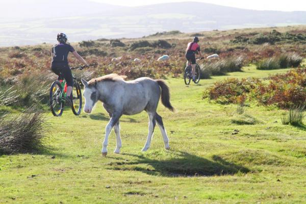 Mountain Biking in Conwy