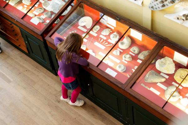 Girl in a museum studying a fossil