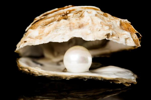Pearl in an Oyster