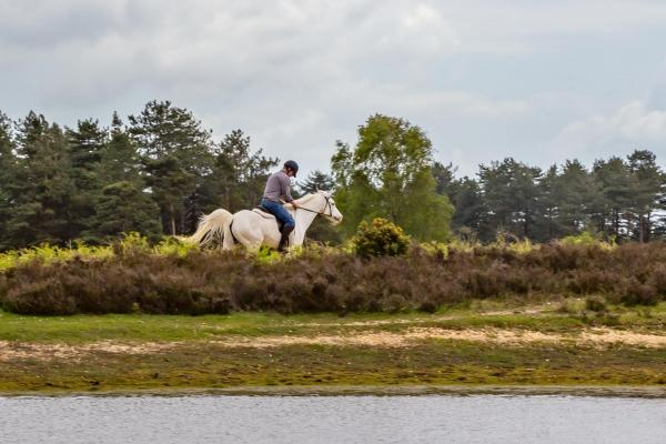 Horse riding in New Forest