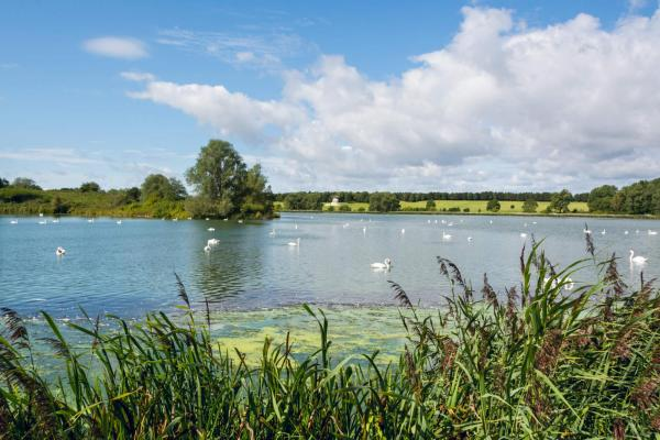 North Willen Lake with swans