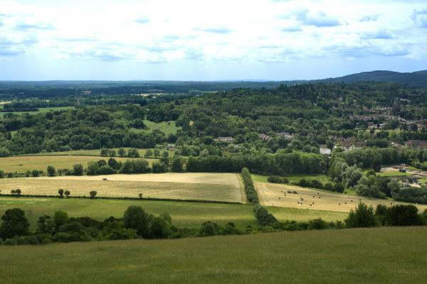 Walking and Rambling in Tanners Hatch Surrey Hills