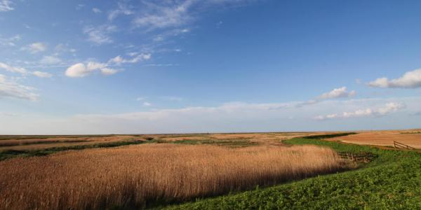 Cley next the sea, nature reserve marshes