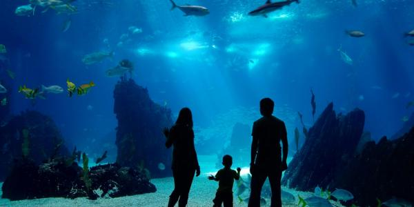 Family looking at a marine aquarium