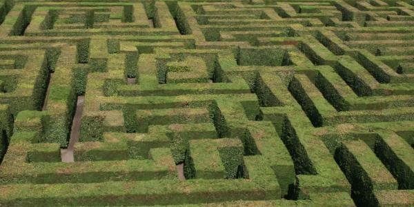 Maze of hedges