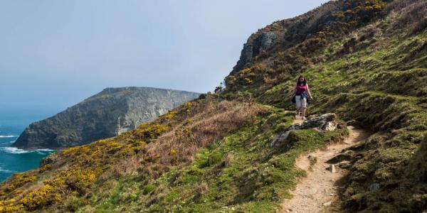 Walker on Cornish coastal path near Tintagel