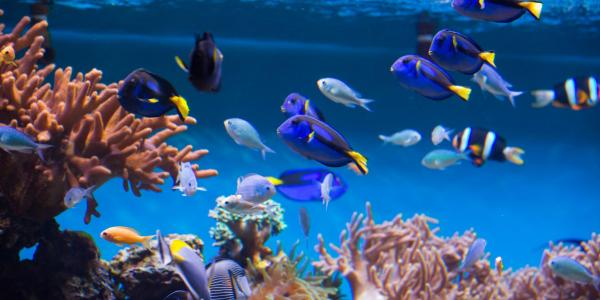 Image of an aquarium