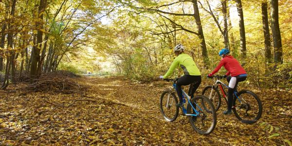 Cycling in Sherwood Forest